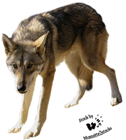 Cut-out stock PNG 22 - Sarloos wolf by Momotte2stocks