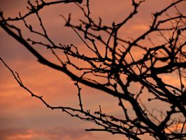 Branch Silhouettes by Michies-Photographyy