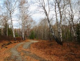 Road in autumn forest by Tumana-stock