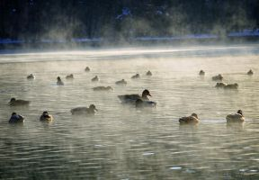 Wintermorning. by Phototubby
