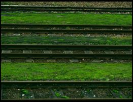 Tones of Green by schildgroede