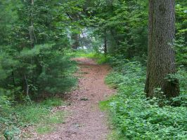 forest pathway stock by WKJ-Stock