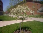 Campus Tree by aldraw