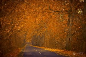 road of gold by ildiko-neer