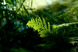 sunlight on green plant by macgl