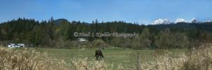 Horses and Mountains- Maple Ridge, B.C. by 12monthsOFwinter