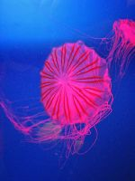 Jellyfish 3 by hiram67