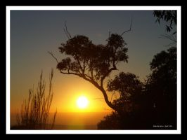 Mountain Sunrise by FireflyPhotosAust