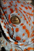 Tokay by CamStatic