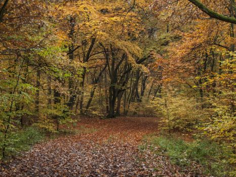 STOCK Forest 4 by Inilein