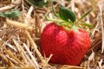 strawberry by Kristinaphoto