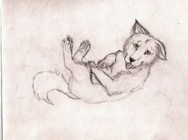 Wolf pup by Rianne2k8
