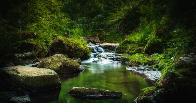 Forest Creek II by MoonKey19