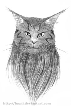 Main Coon by lmmi