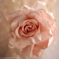Rose and bokeh by FrancescaDelfino
