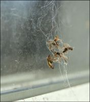 A Spiders Left Overs by GrotesqueDarling13