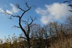 same tree,another sky by ethnonaut