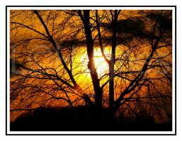 Sun Hides Behind Tree 2 by lehPhotography