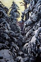 Sawteeth Mountain Pines by maccski