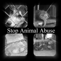 Stop Animal Abuse 1 by Jessawary