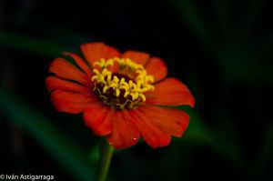 Nature Shots 17 by dargor1406