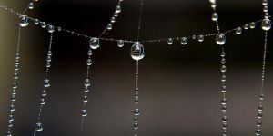 pearls on the line by augenweide