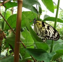 Butterfly House by Hitomii