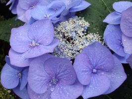 Waterdrops by taletha