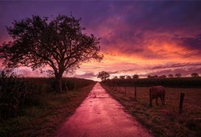 Long Pink Road to Nowhere - Germany by Bakisto