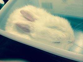 My girl cousin's new pet bunny named Starlight ^^ by Magic-Kristina-KW