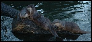 how cute are otters by crashchick