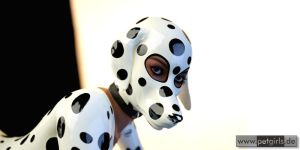 Dalmatian by My-Rho