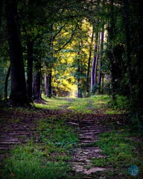 The Walking Forest by Beauty-in-a-Picture