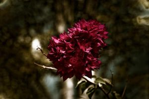 Faded  Bloom by Mitchography