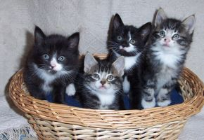 kittens by evilpinguperson