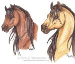 Horses - practice crap by algy