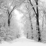 White way by Al-Baum