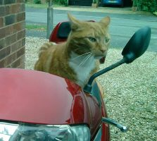 Moped driving Cat by Catsertra