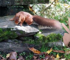 Rootling squirrel by piglet365