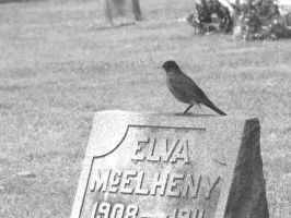 Bird on a Tombstone by defyinggravity10