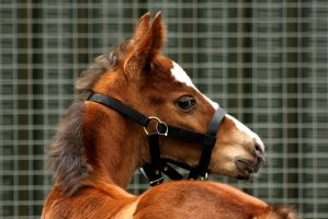 foal by imtl