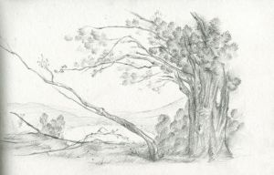 the leaning tree trunk by analepsis