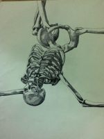 fine liner skeleton by naruechisous