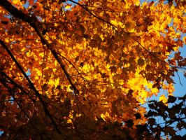 As Fall Begins to Fade by amyreneejohanson