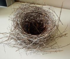 Nest 5 by GoblinStock