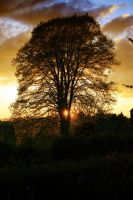 Heart for Tree by henlor