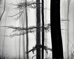 A Strip of Trees 04 by HorstSchmier
