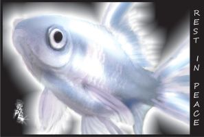 silver_fish by jotapehq