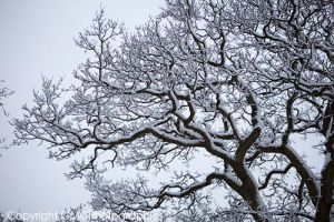 Snow Tree by GMCPhotographics