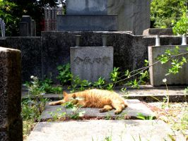Japan5 - cemetery cat by Syna1